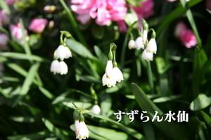 Img_0003_1_3