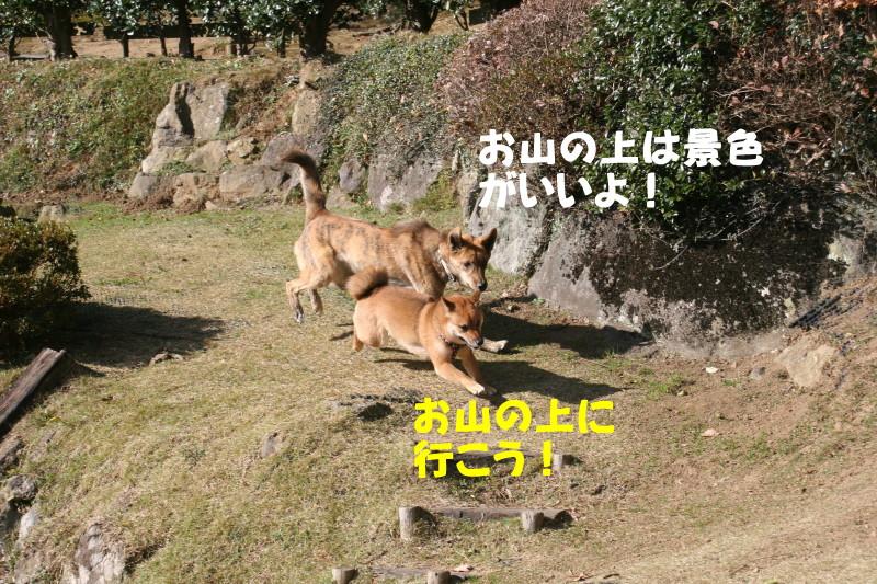 Img_02222_1