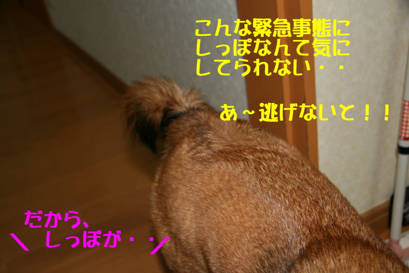 Img_00571_1