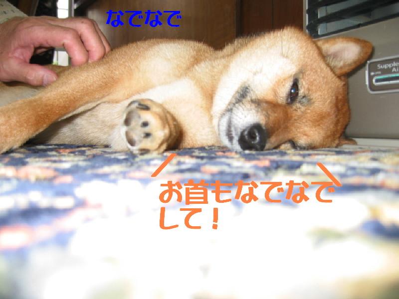 Img_0983_1