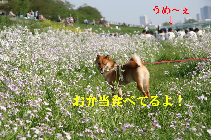Img_0022_1
