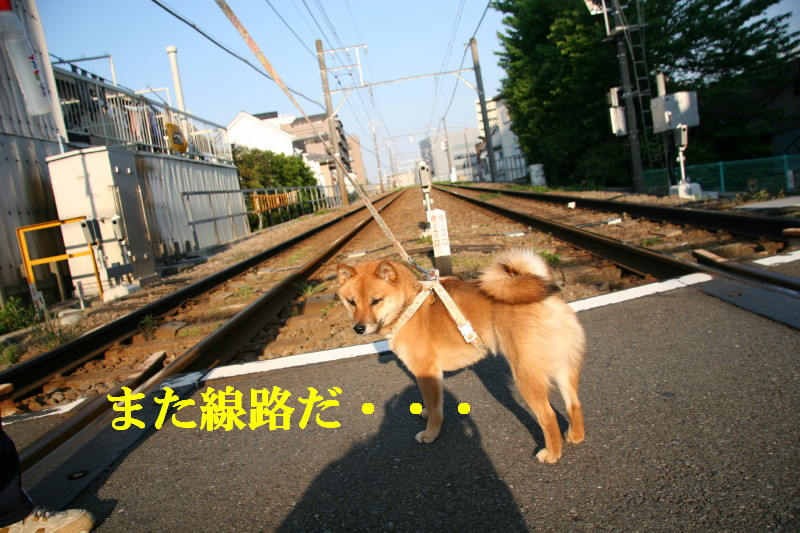 Img_0019_1
