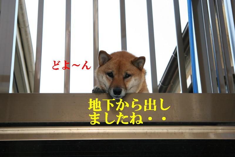 Img_0024_1