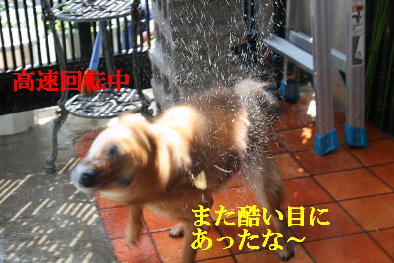 Img_0045_1