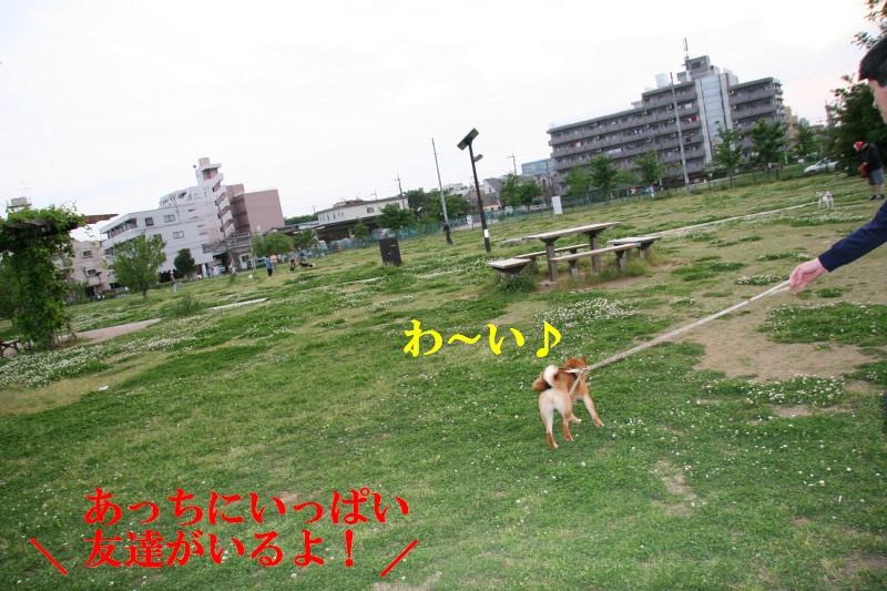 Img_0054_1