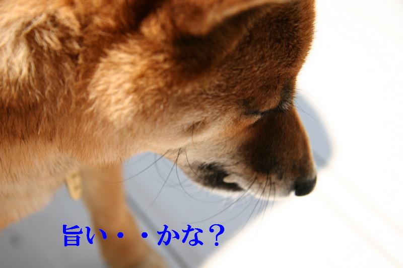 Img_0010_1