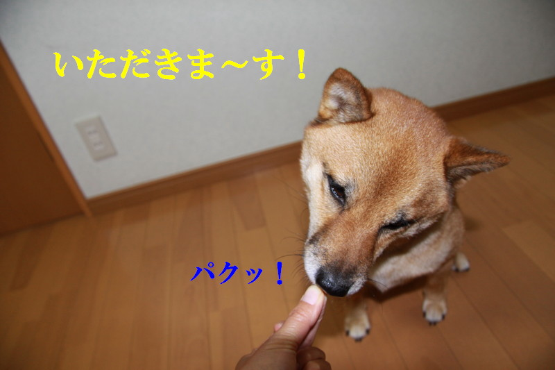 Img_0304_1
