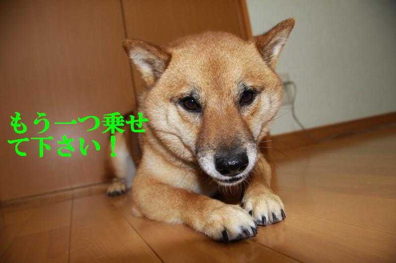 Img_0371_1