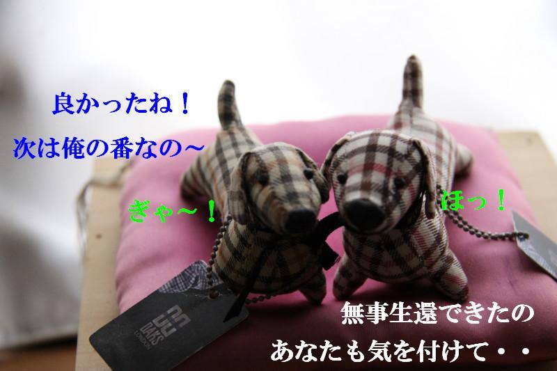 Img_0528_1