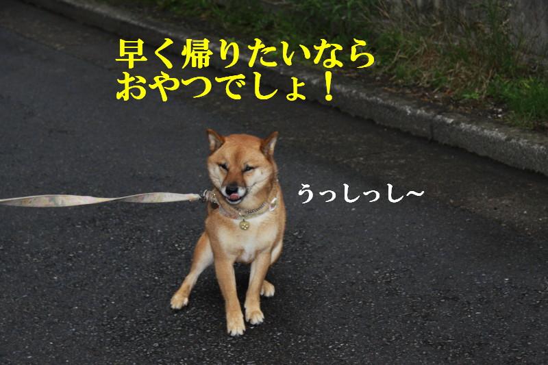 Img_0575_1