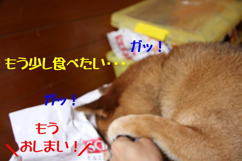 Img_0964_1
