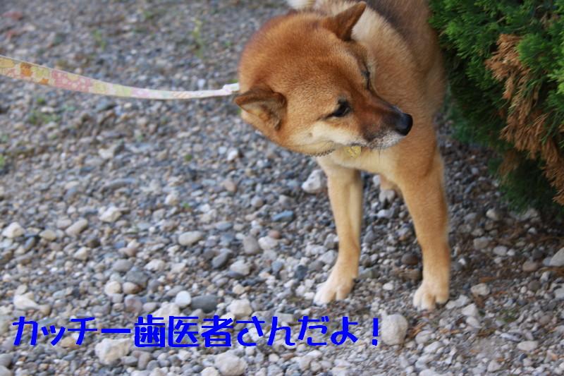 Img_1031_1