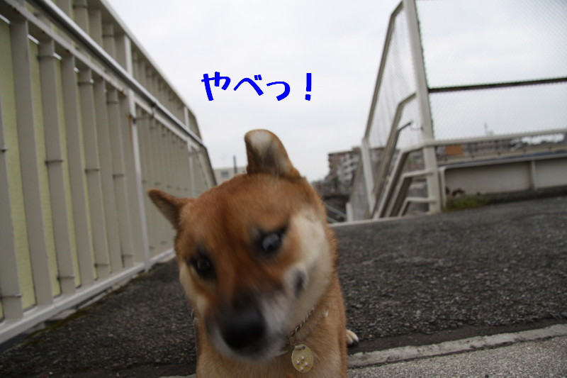 Img_0003_1