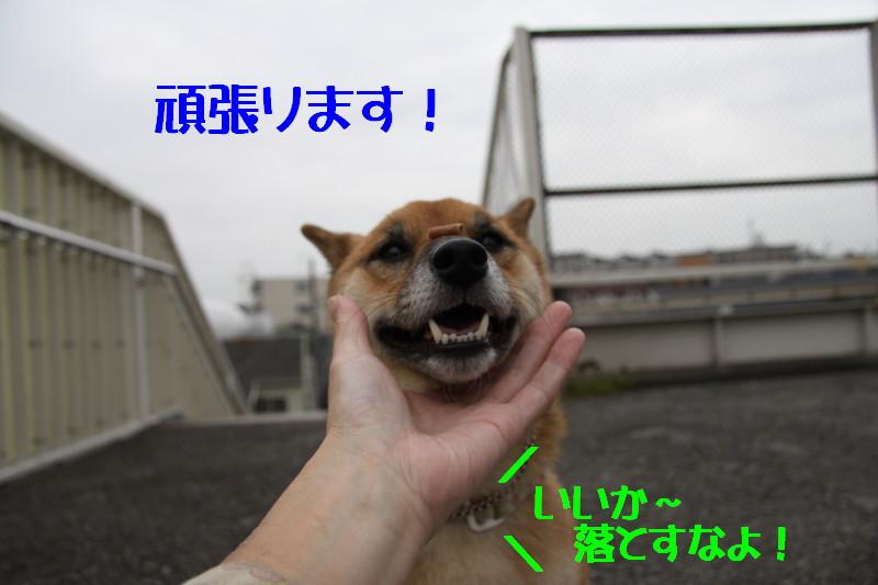 Img_0021_1