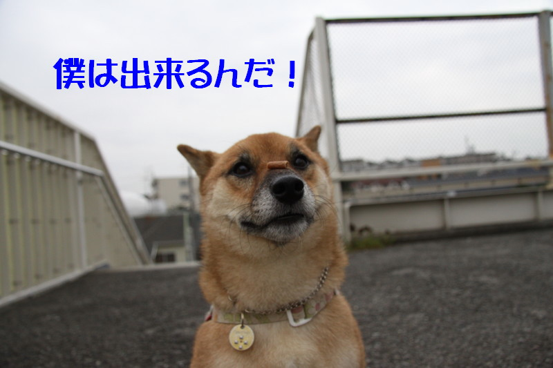 Img_0023_1