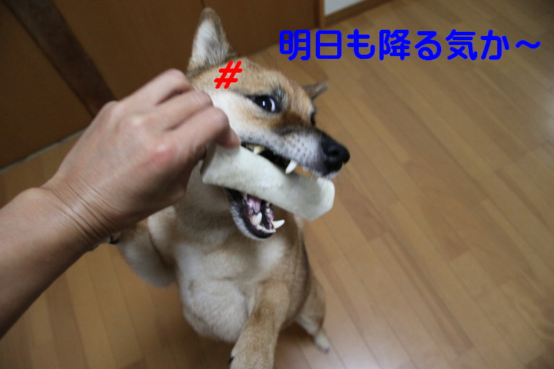 Img_0033_1