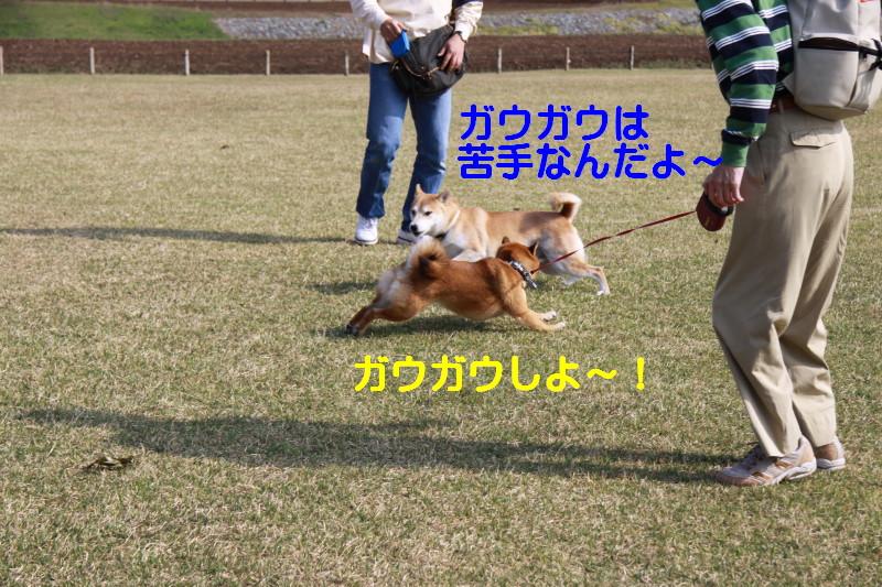 Img_0042_1