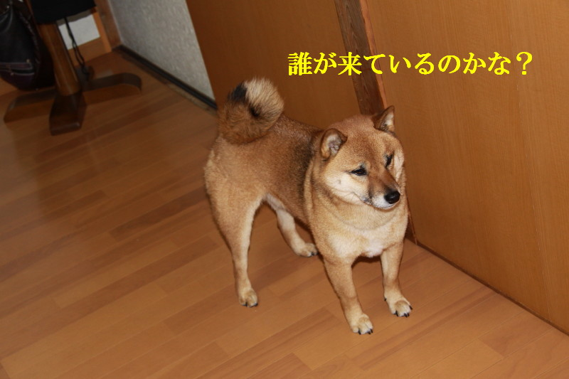 Img_0031_1