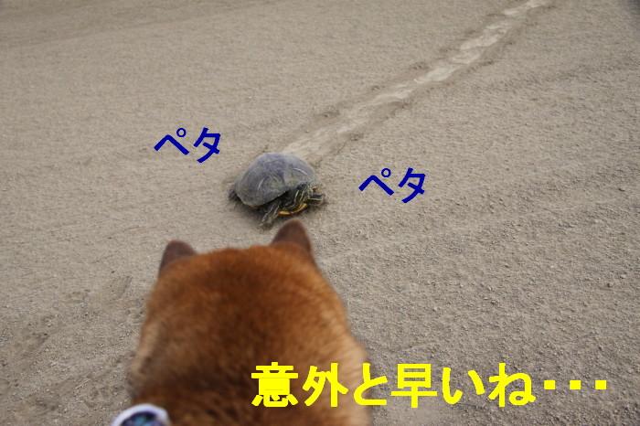 Img_0018_1