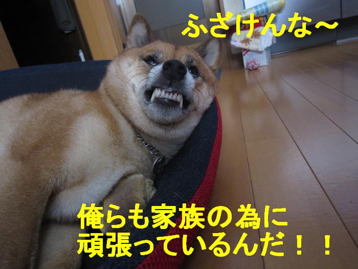 Img_1298_1_2