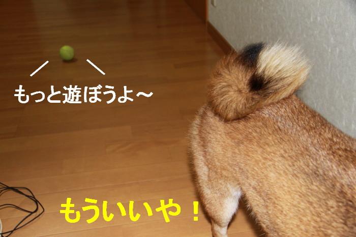 Img_0030_1