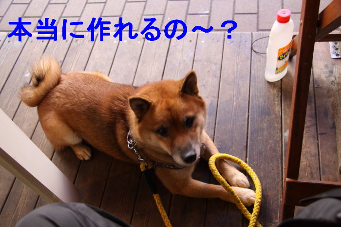 Img_0035_1