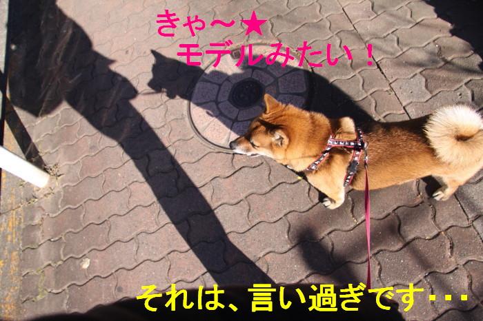 Img_0046_1