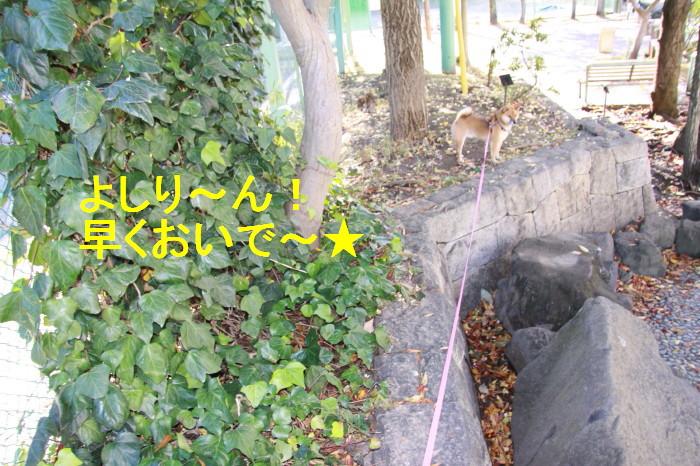 Img_0039_1