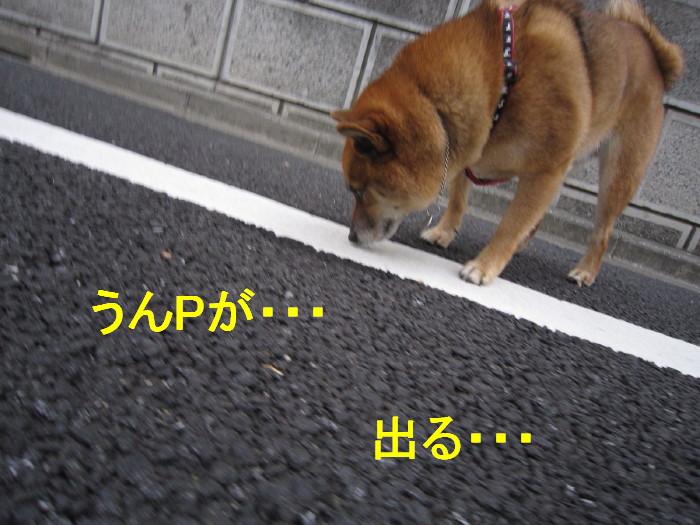 Img_1614_1_2