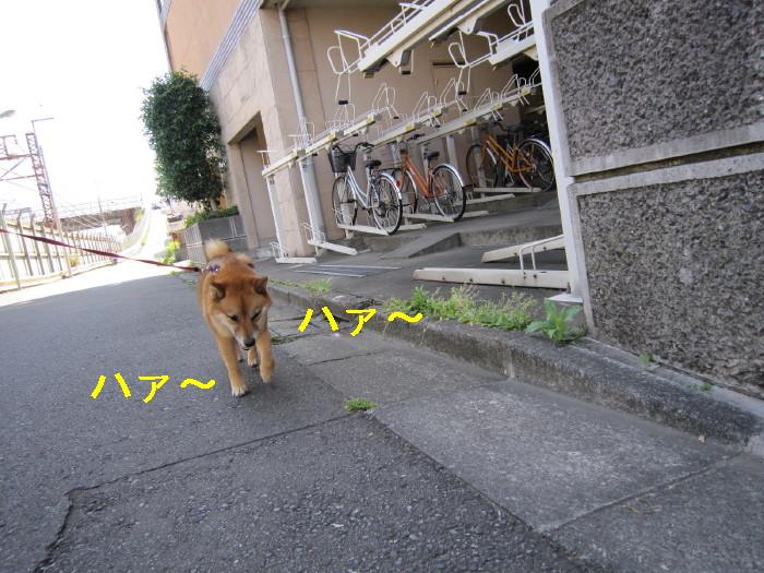 Img_2530_1