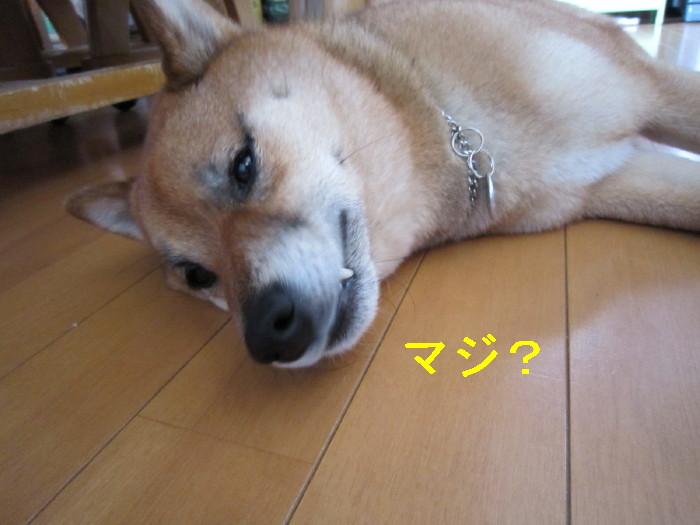 Img_2658_1