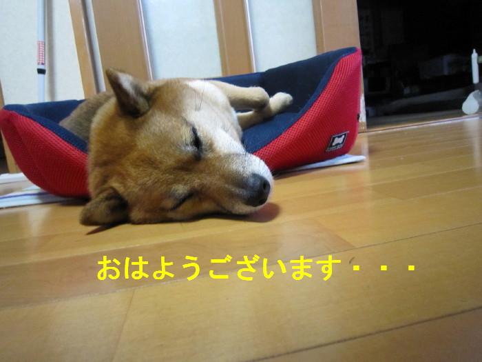 Img_2959_1_2