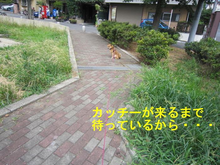 Img_4097_1