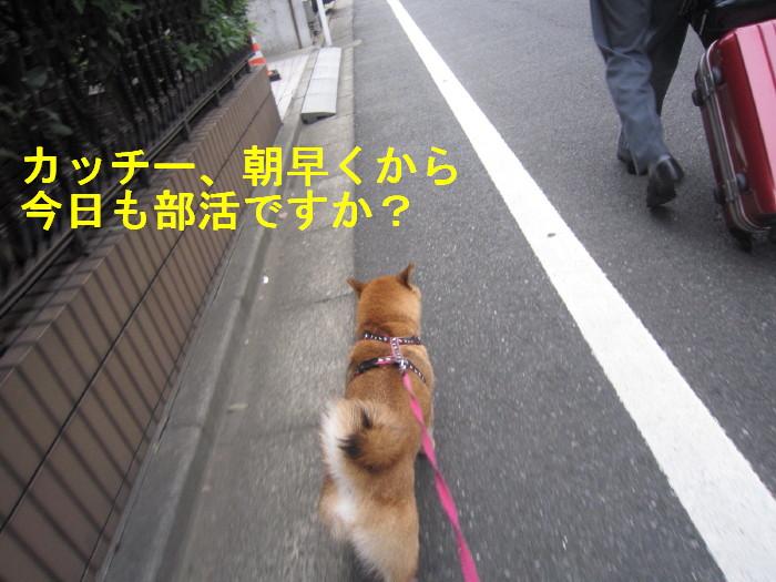 Img_4260_1