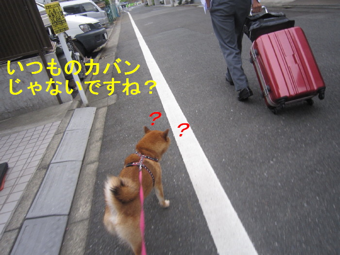 Img_4261_1