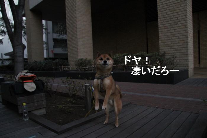 Img_0842_1
